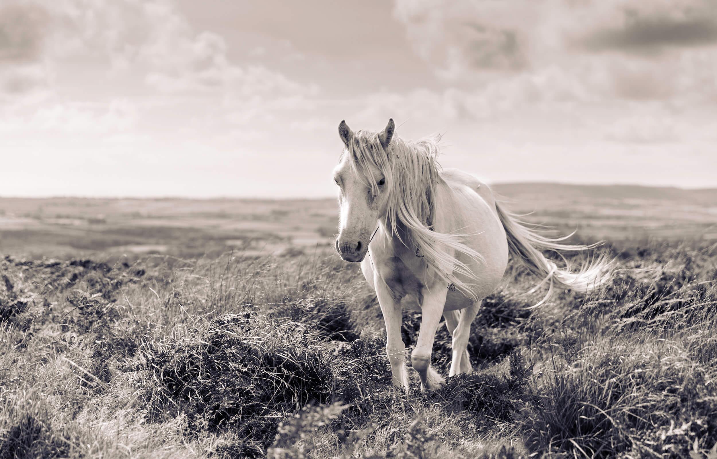 horsebw.jpg