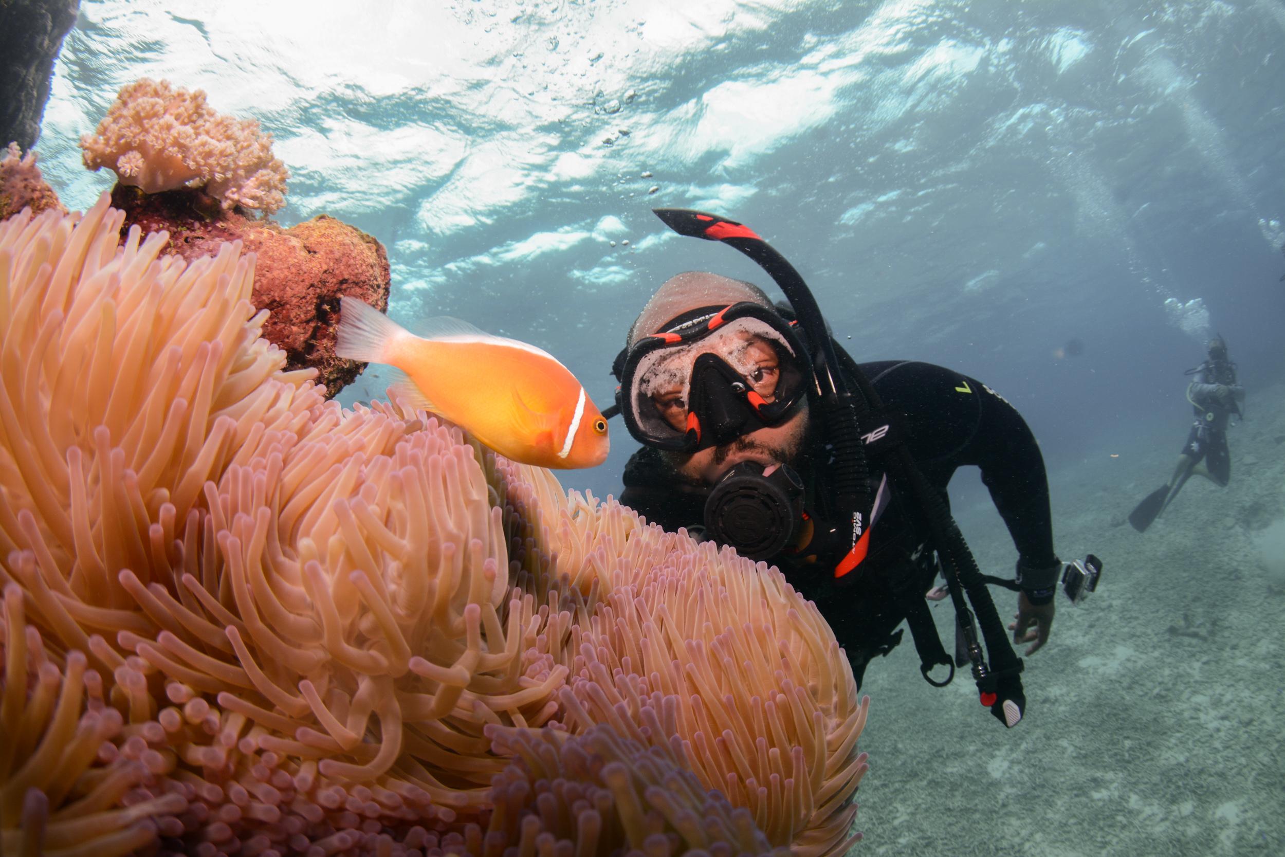 Nemo meets Wayno