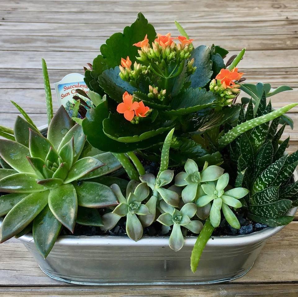 Succulent Planter.jpg