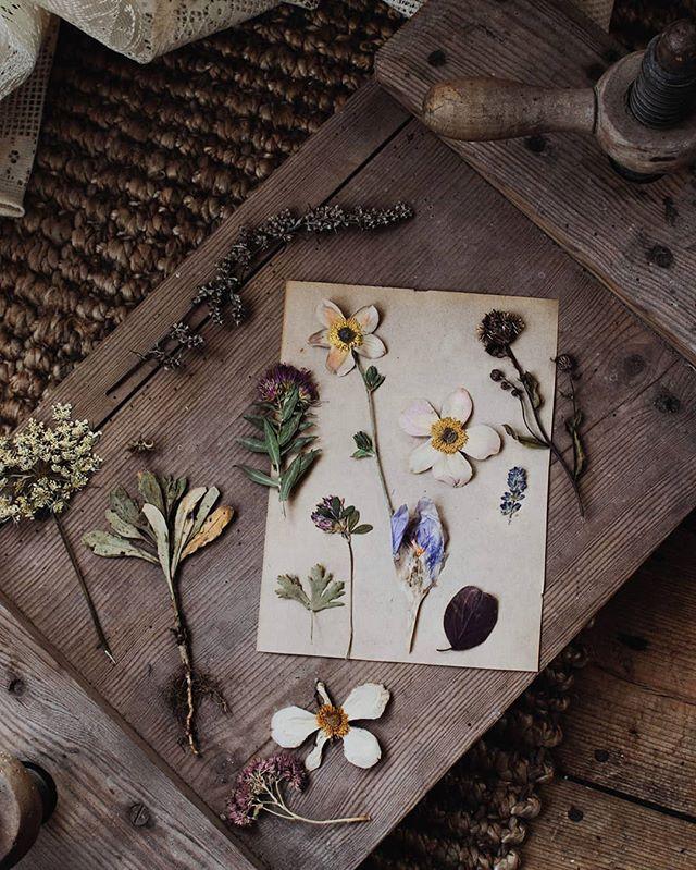 Bättrar på vårkänslan genom att öppna min bortglömda blompress 🌸🙌