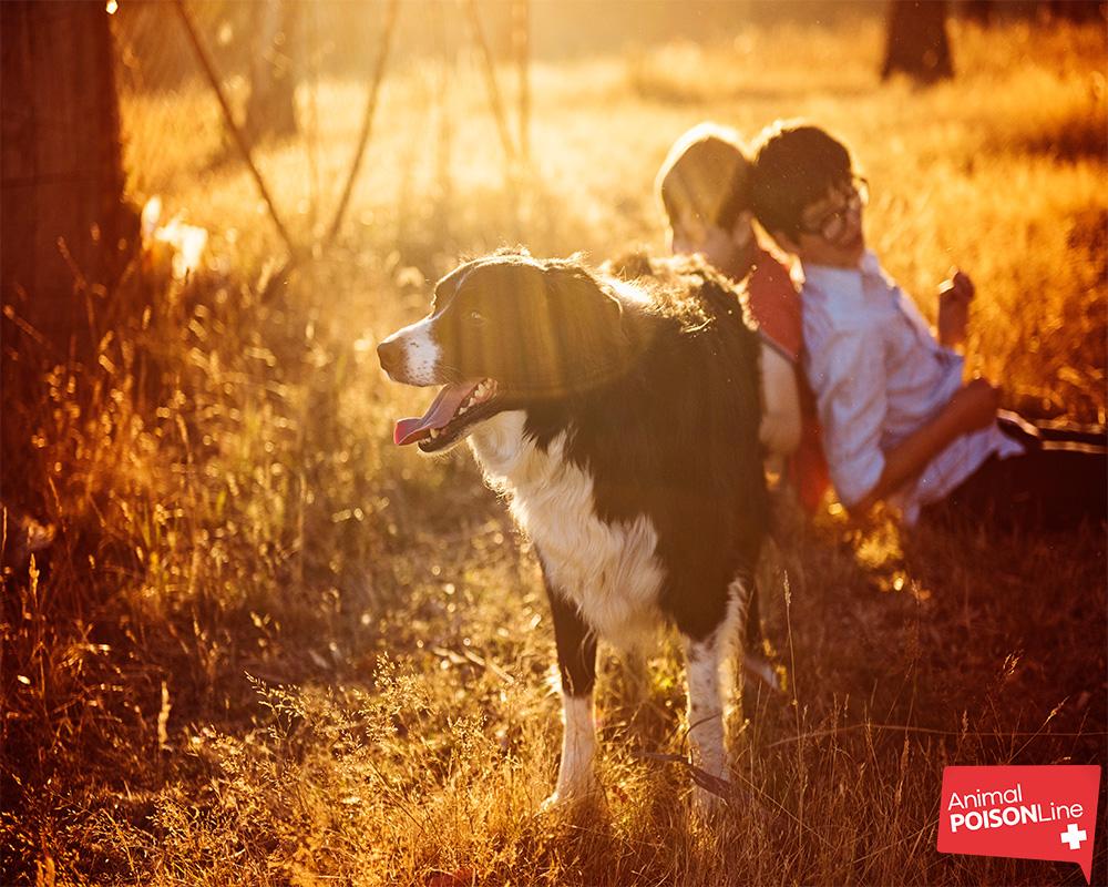 Dog Vitamin D APL.jpg