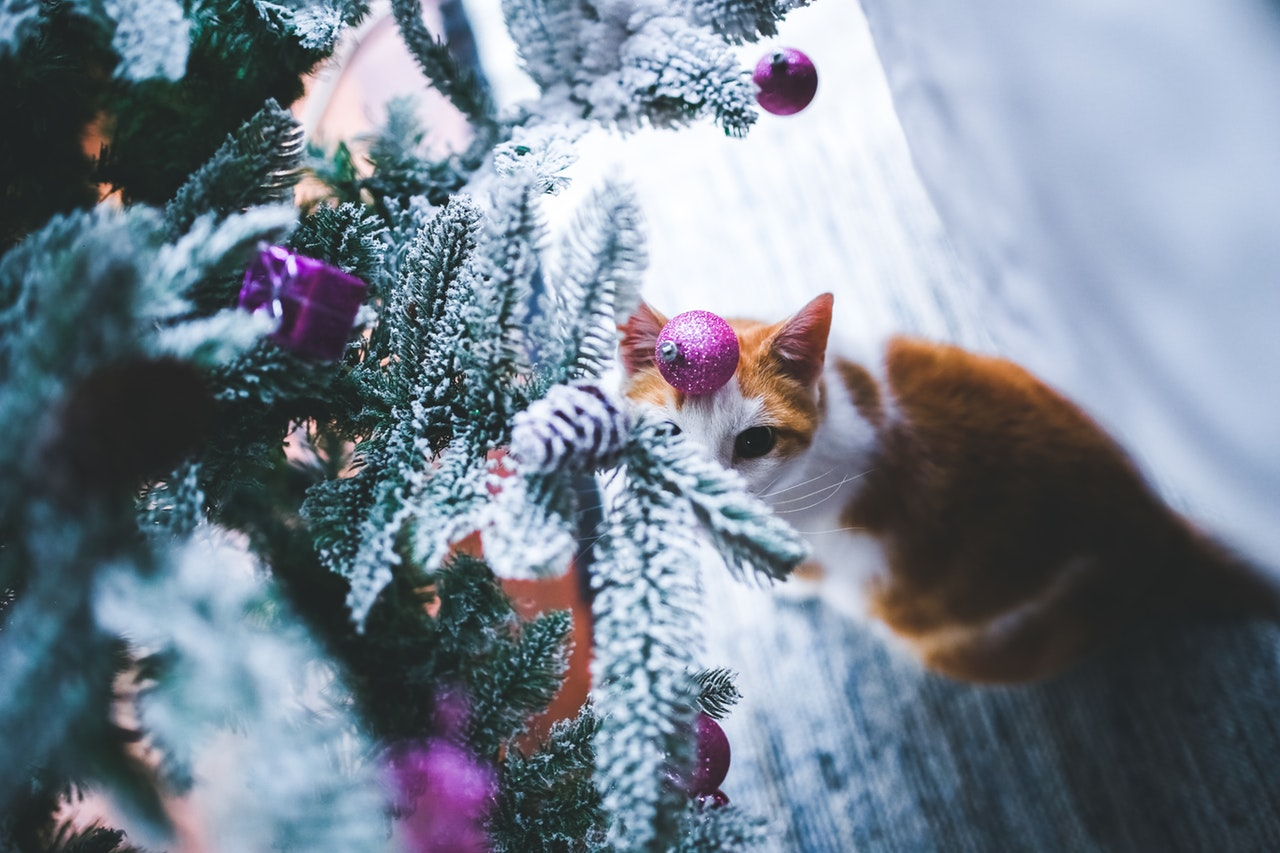 Christmas tree Cat APL