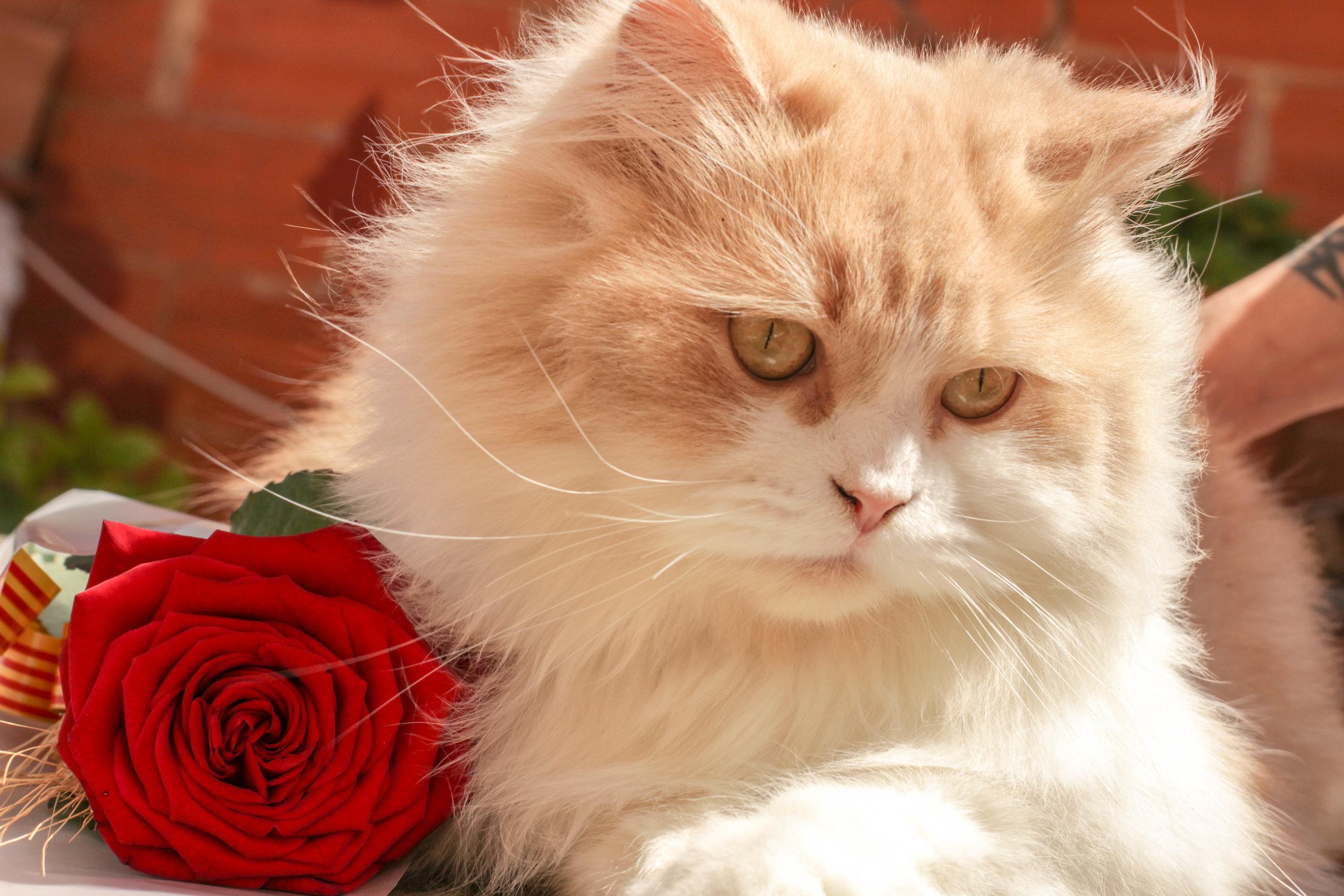 Cat & Roses