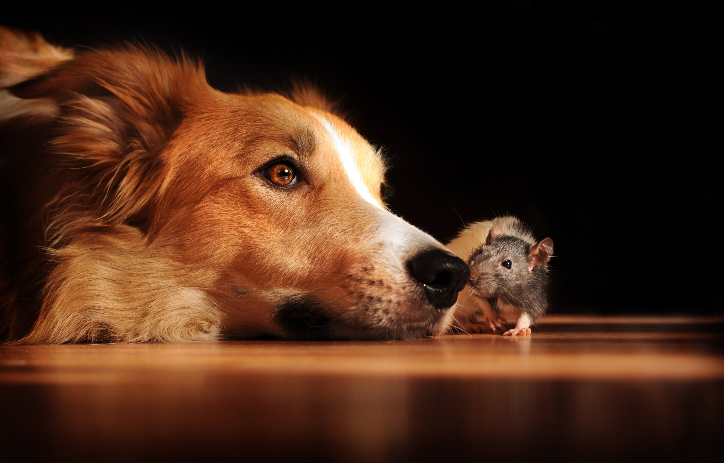 Dog and mouse cute APL