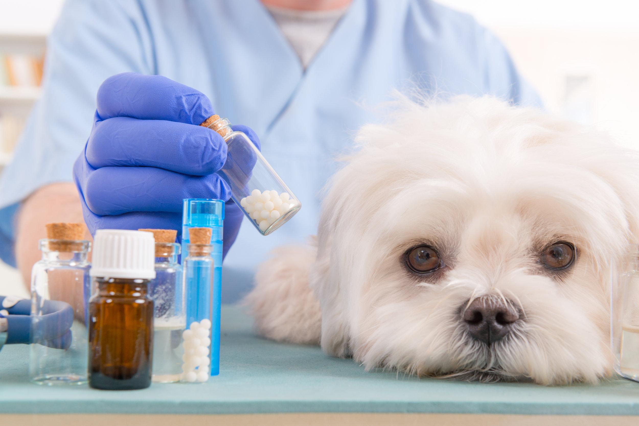 Dog Supplements APL