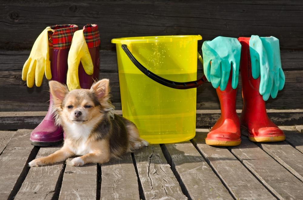 Detergents Dog APL