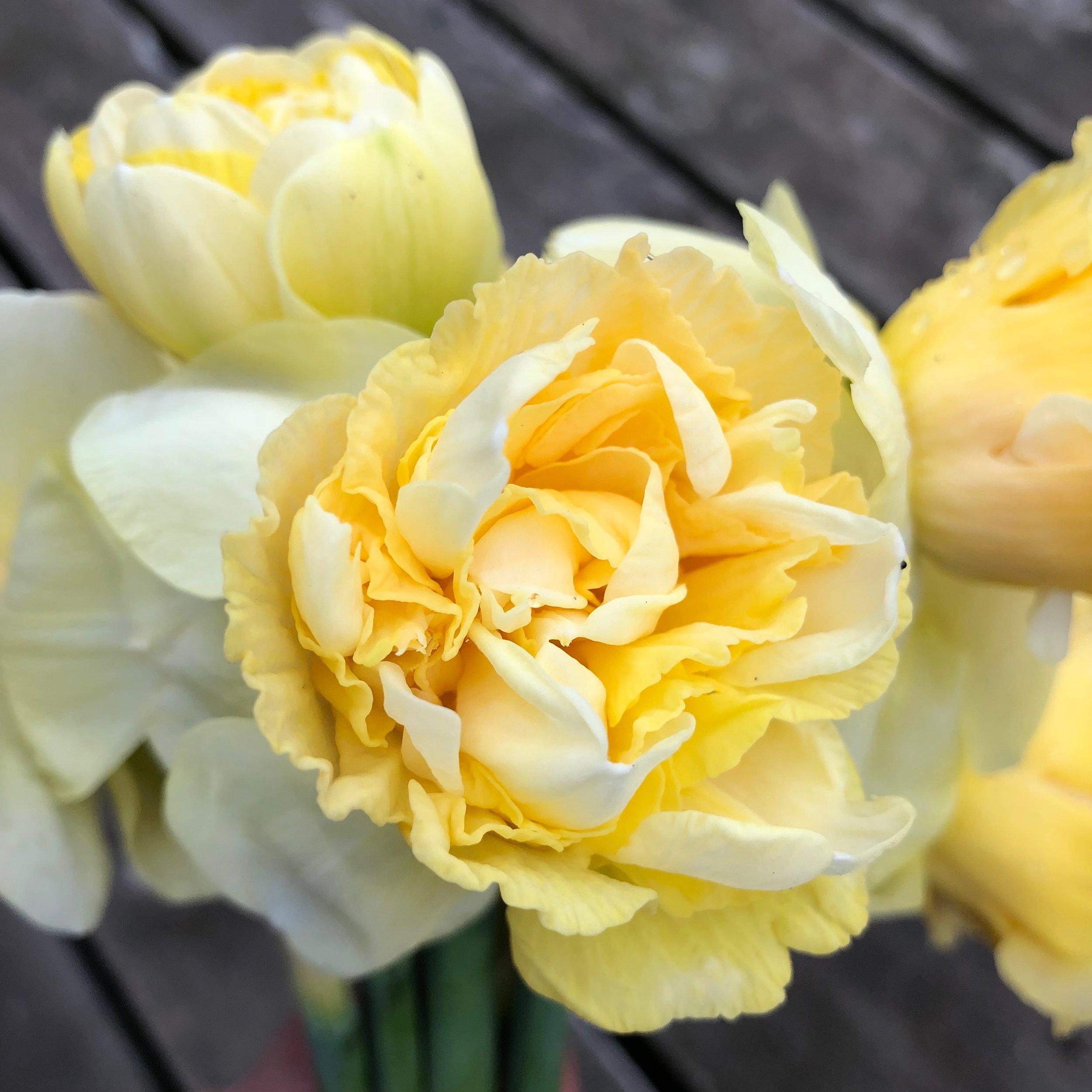 Art Design Daffodil
