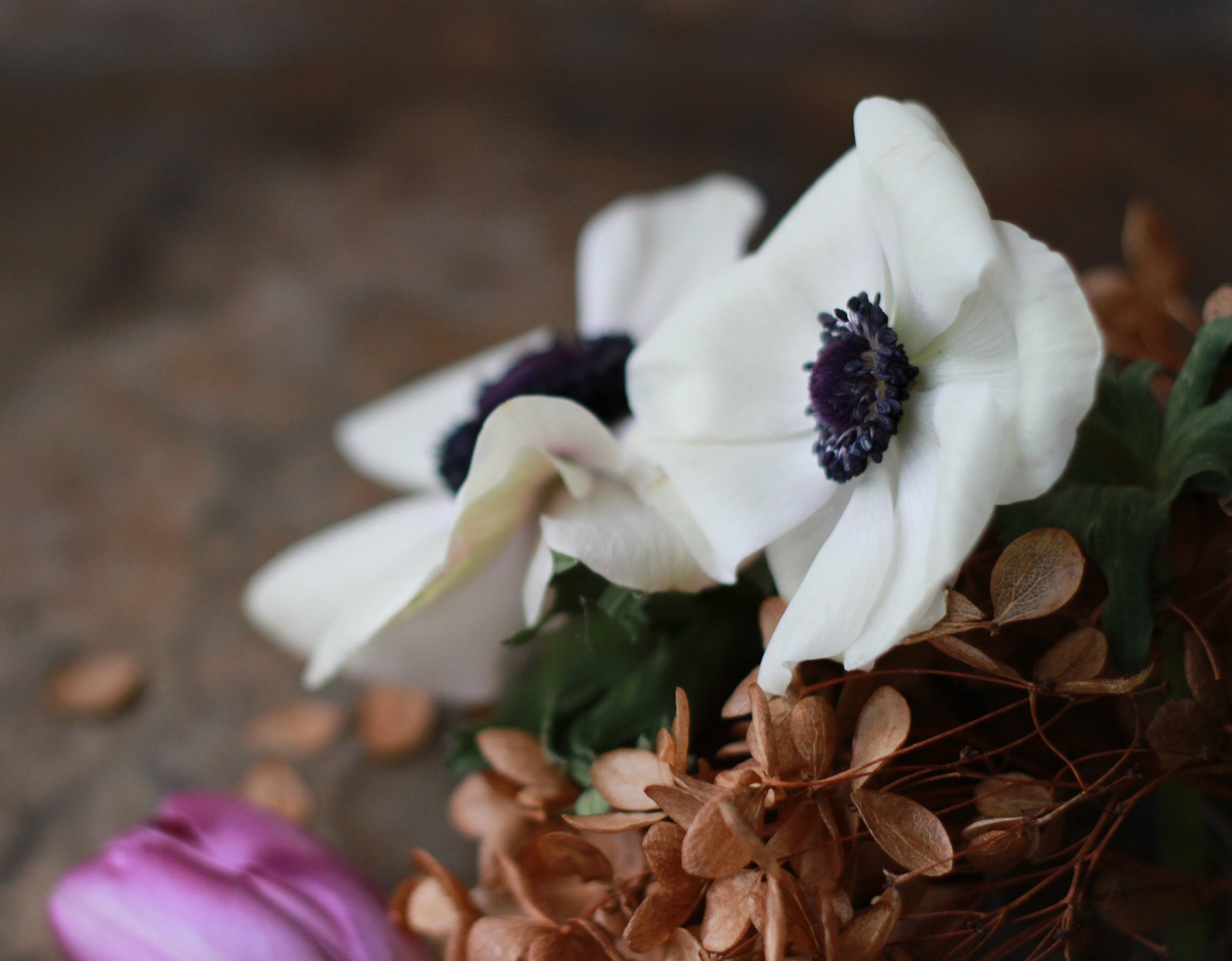 Anemone and dried Hydrangea heads.jpg