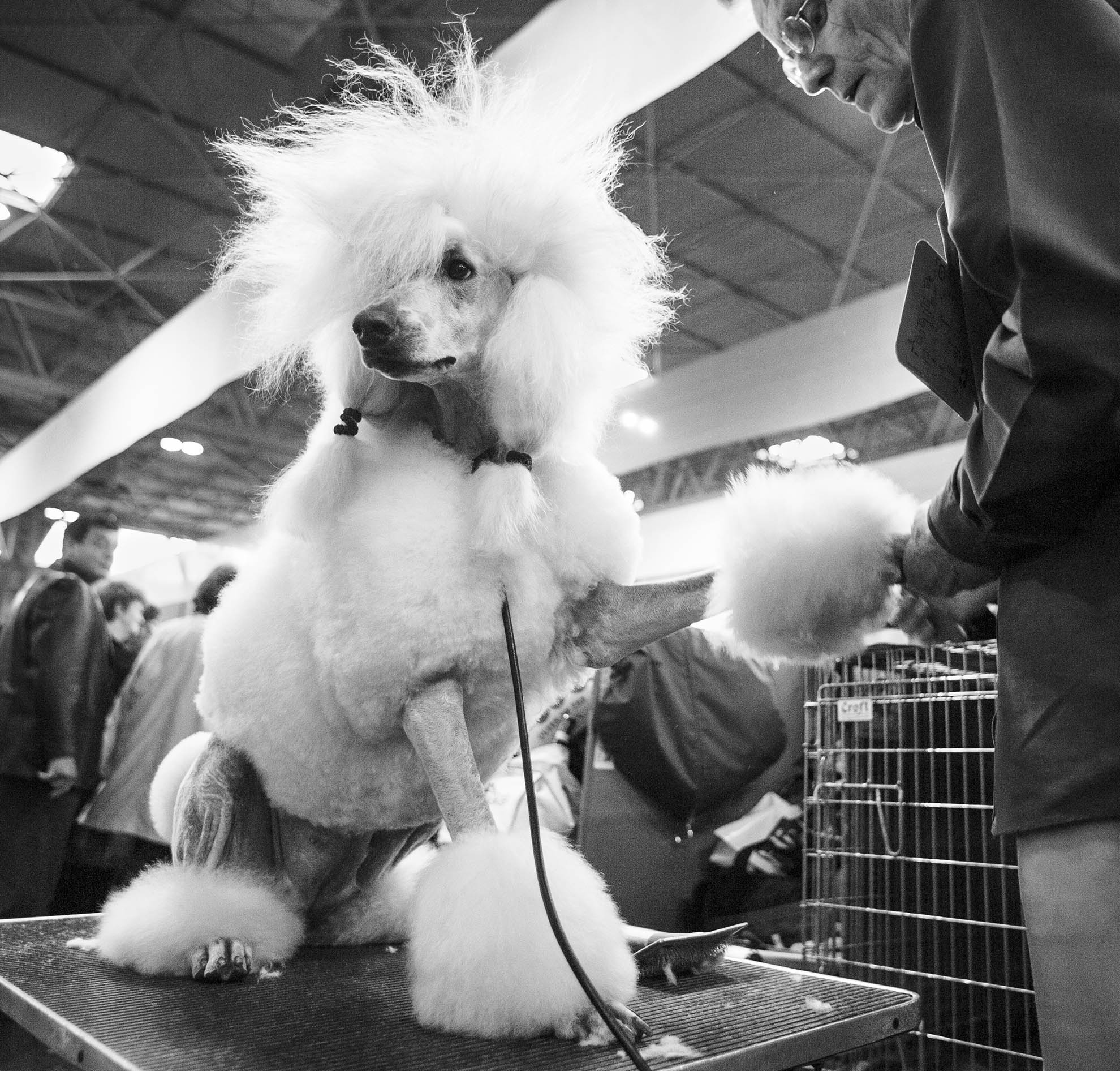 Crufts, the largest dog show in the world, takes place every March in Birmingham, UK.