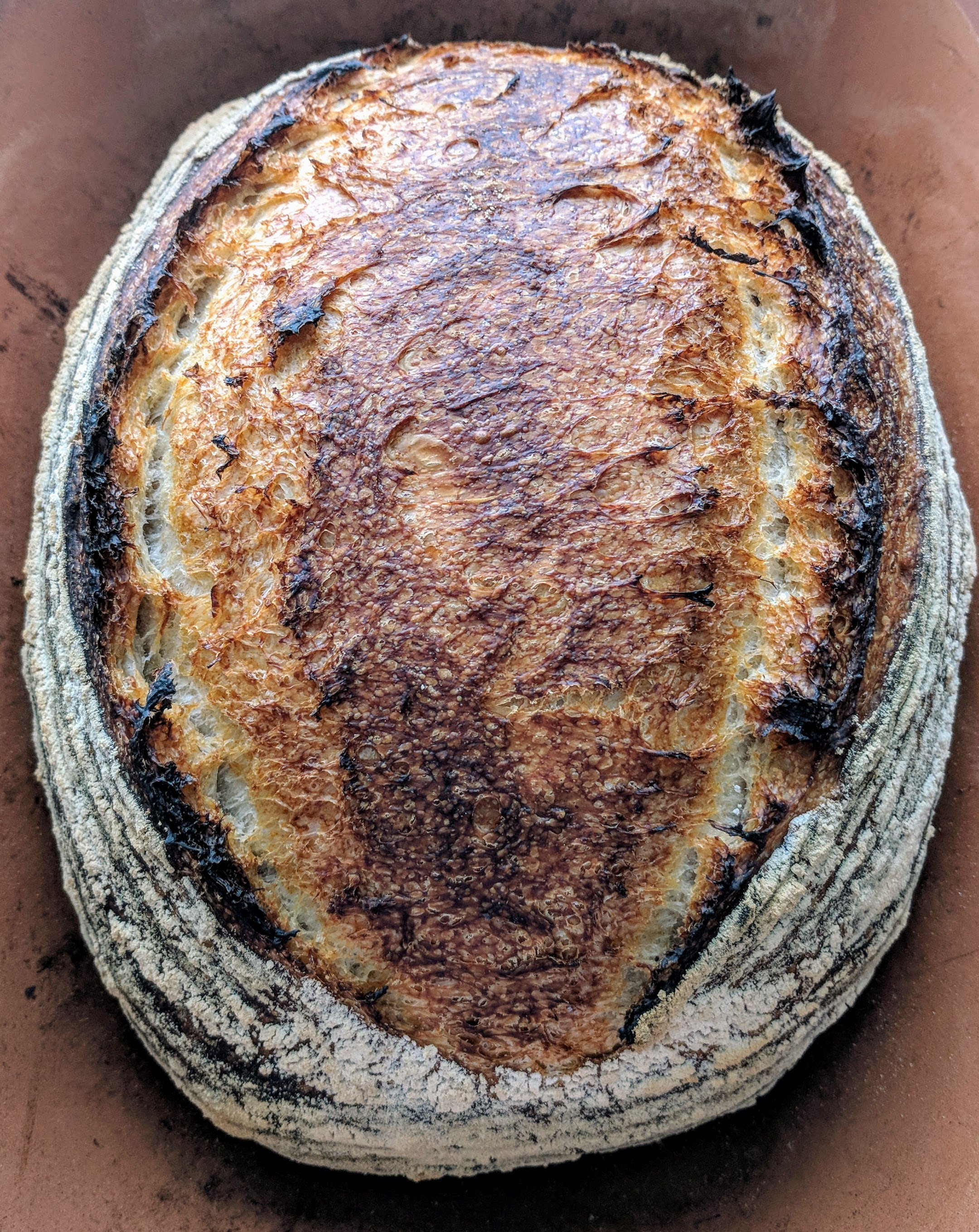 Plain Sourdough  - Simply delicious, and deliciously simple, plain sourdough with nothing added - just four ingredients. Moist with a mild flavor, this bread works well with everything - from PB&J to an olive oil dipper, to burger bun, it's always the right choice. $7 per whole loaf