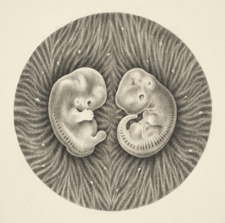 Homo Sapiens - Mus musculus.jpg