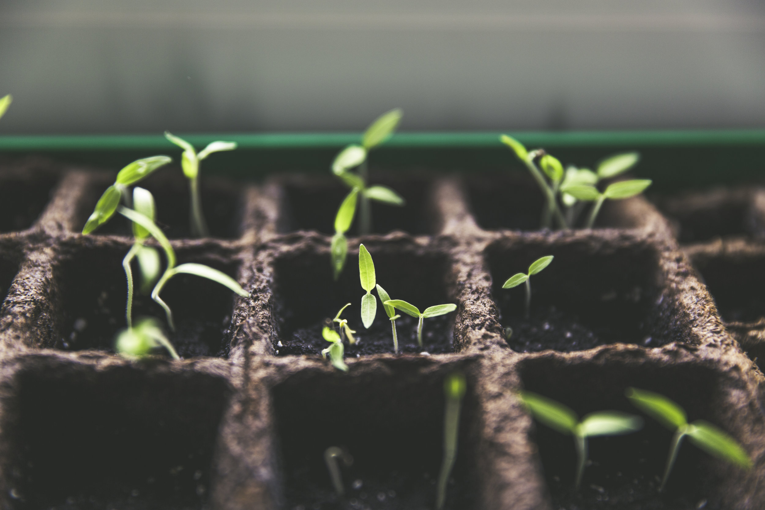 The April Shop - plant your hope with good seeds