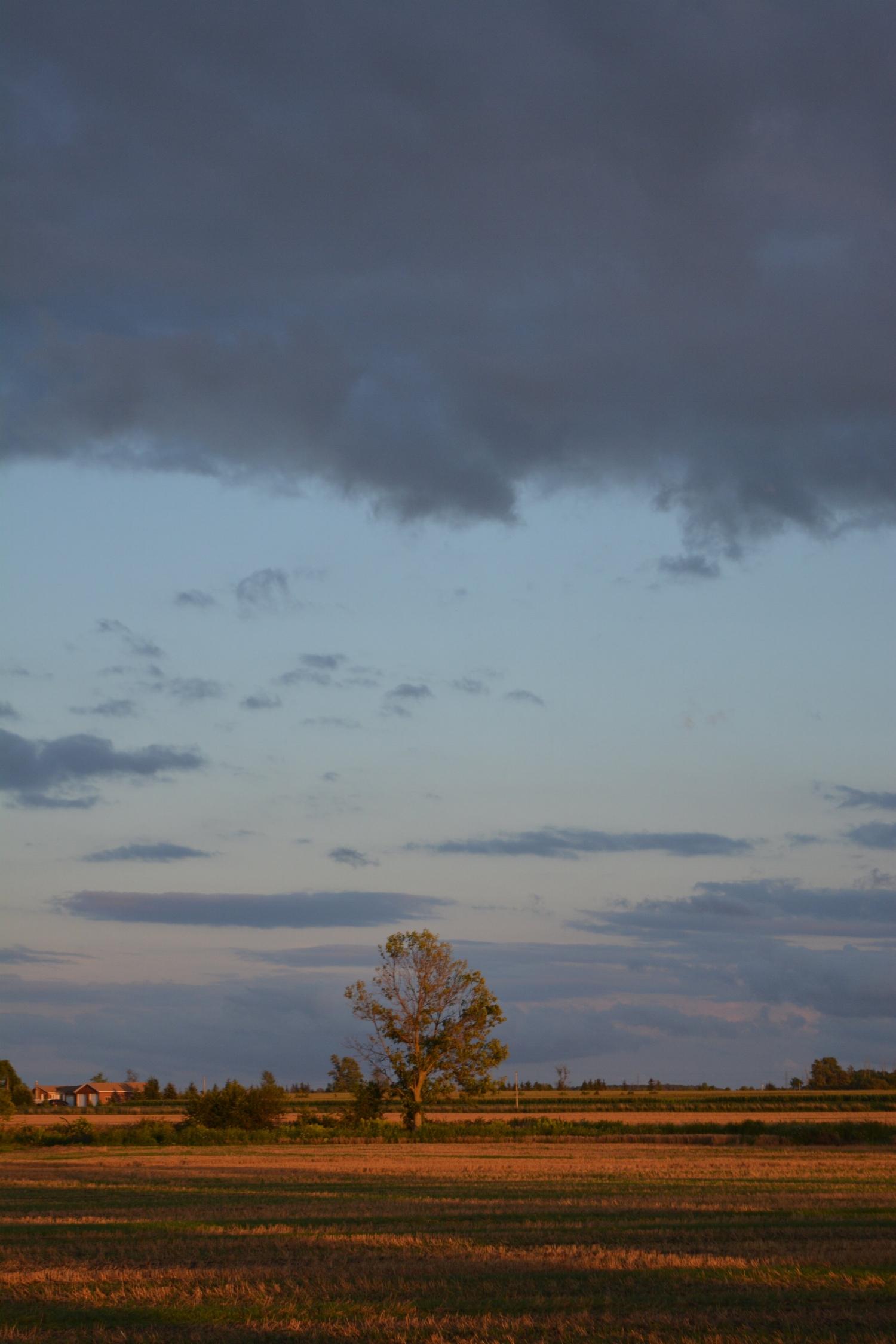 ground tree sky clouds.jpg