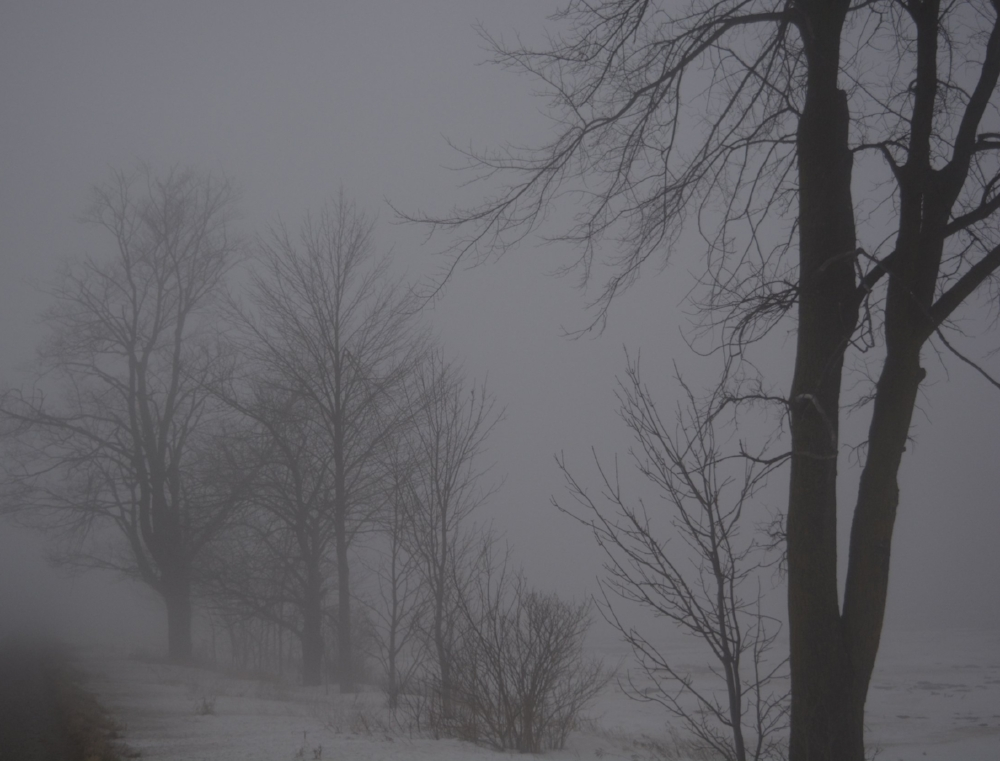 trees in fog.jpg