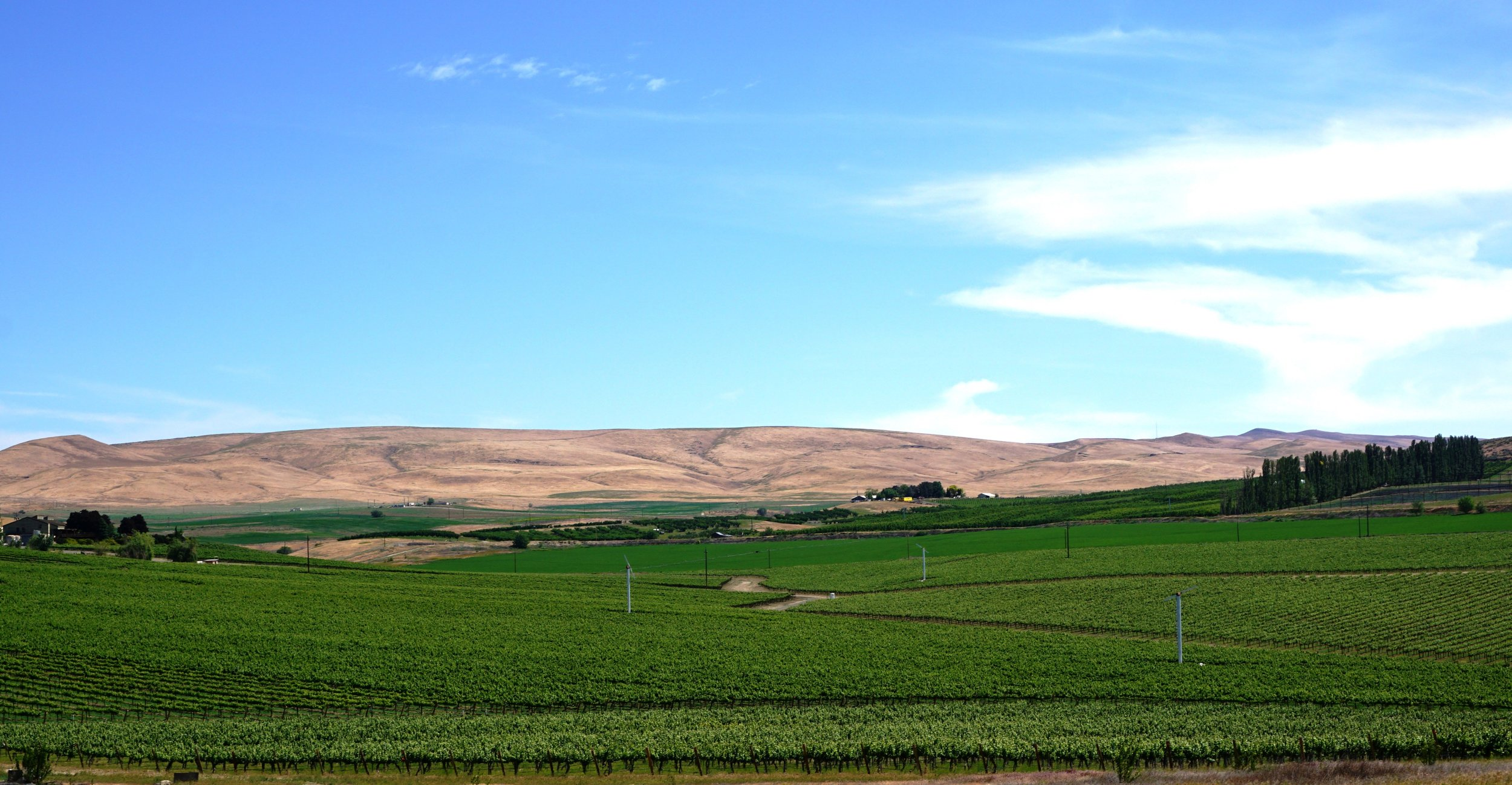 Grape vines and fruit trees rolling along its floor and hillsides are Yakima Valley's version of a red carpet for visitors to this idyllic wine country getaway. Photo courtesy of Viki Eierdam.