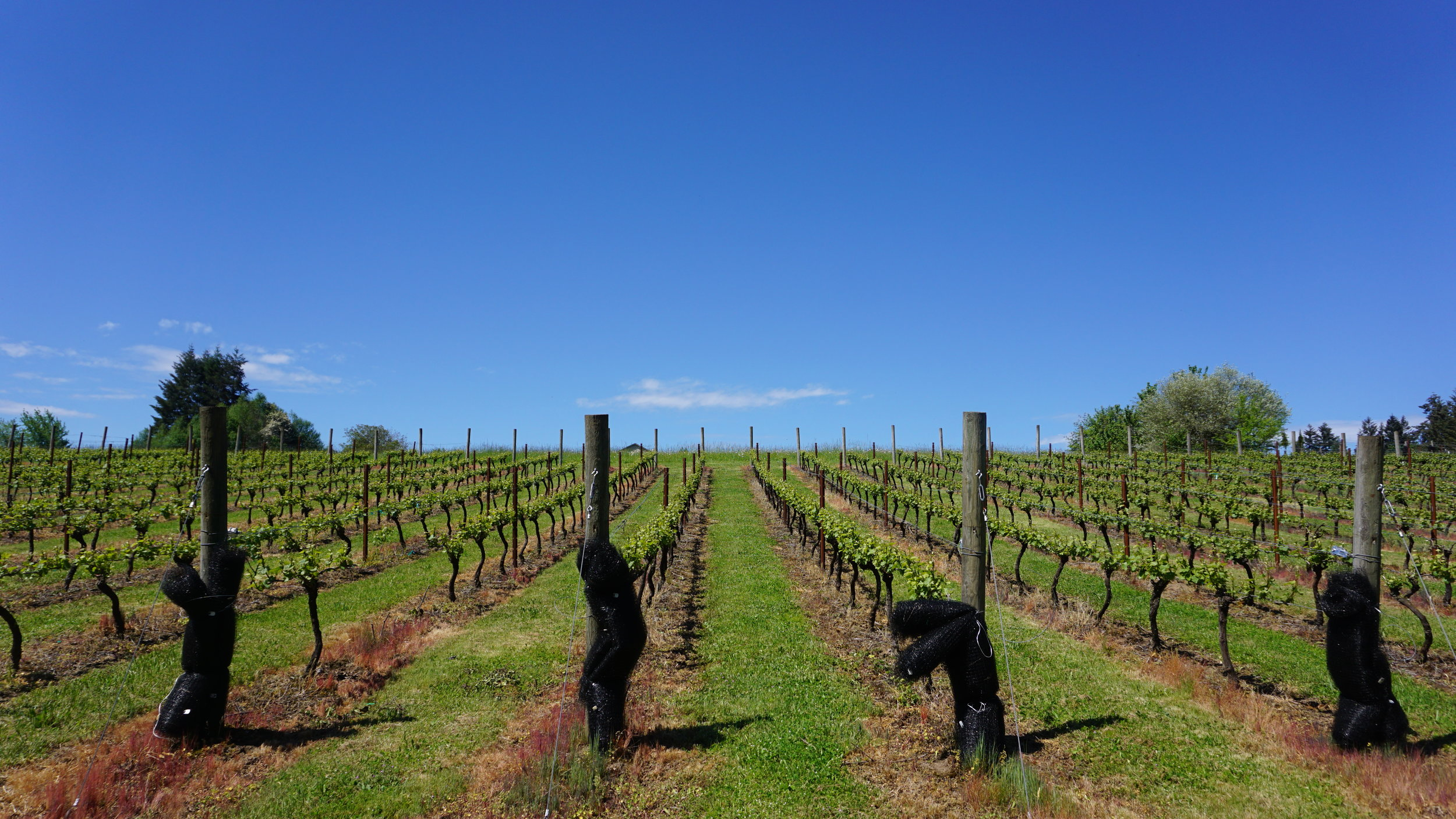 Stavalaura Vineyards and Winery has five acres under vines and 20 more prepped for planting. Viki Eierdam