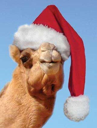 camel_christmas_hat.jpg