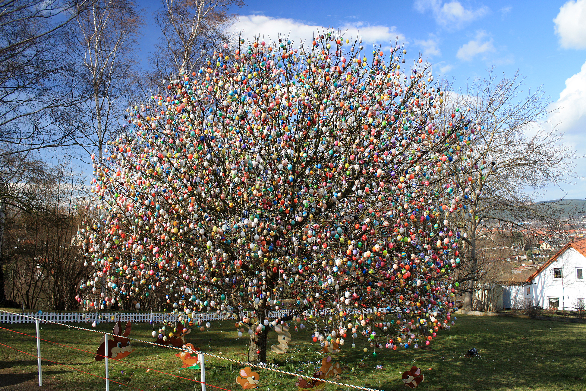 The most famous Ostereierbaum in Germany - Saalfelder Ostereierbaum