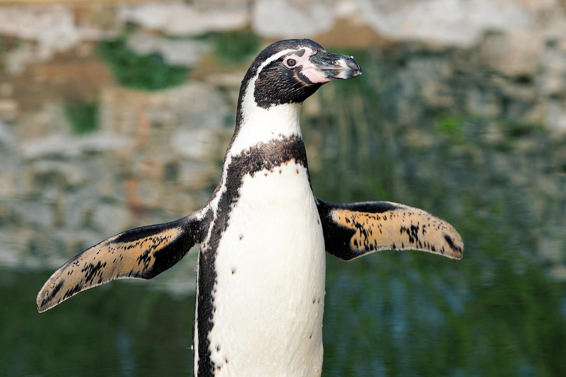 penguin-2204566_1920.jpg