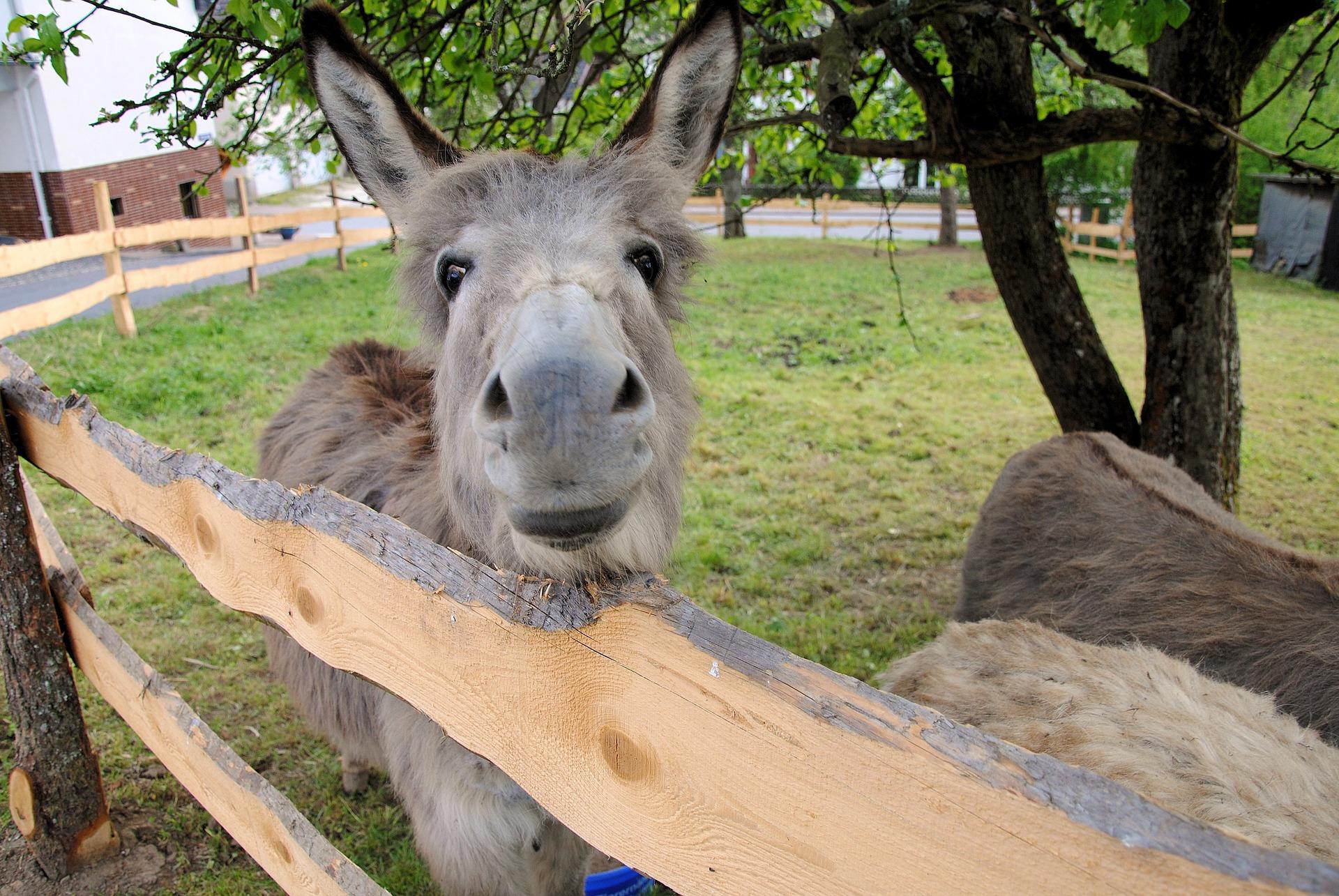 donkey-2728033_1920.jpg