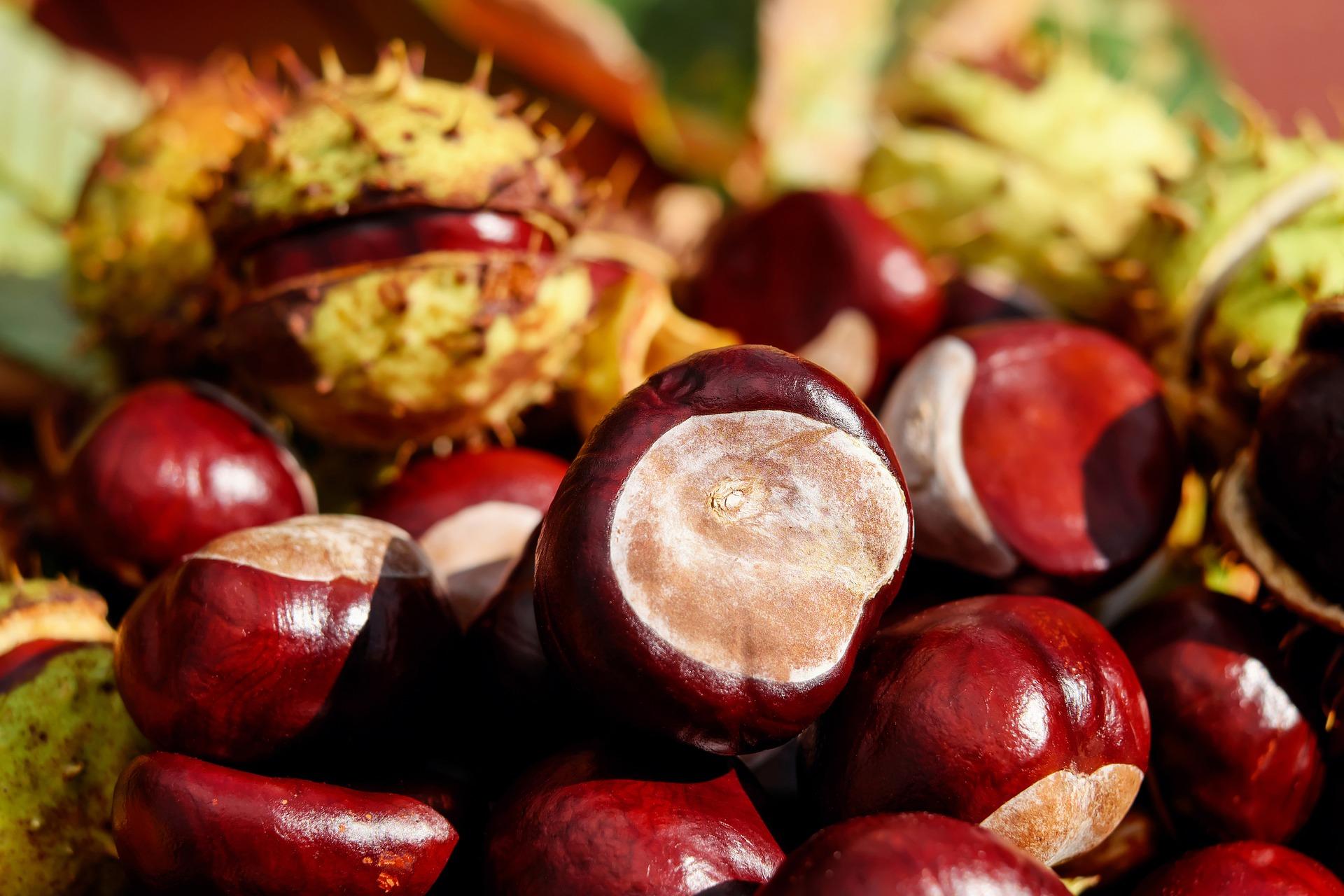 chestnut-1710748_1920.jpg