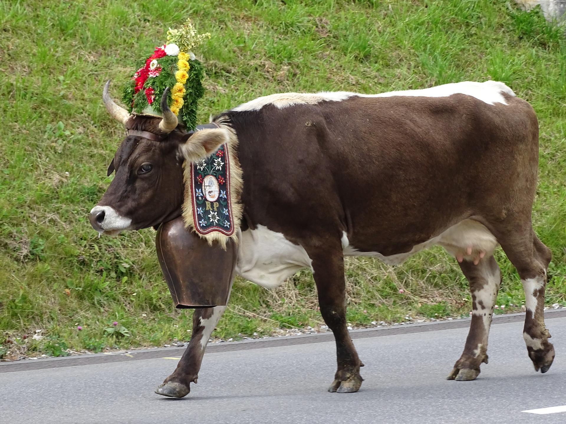 cow-2750335_1920.jpg