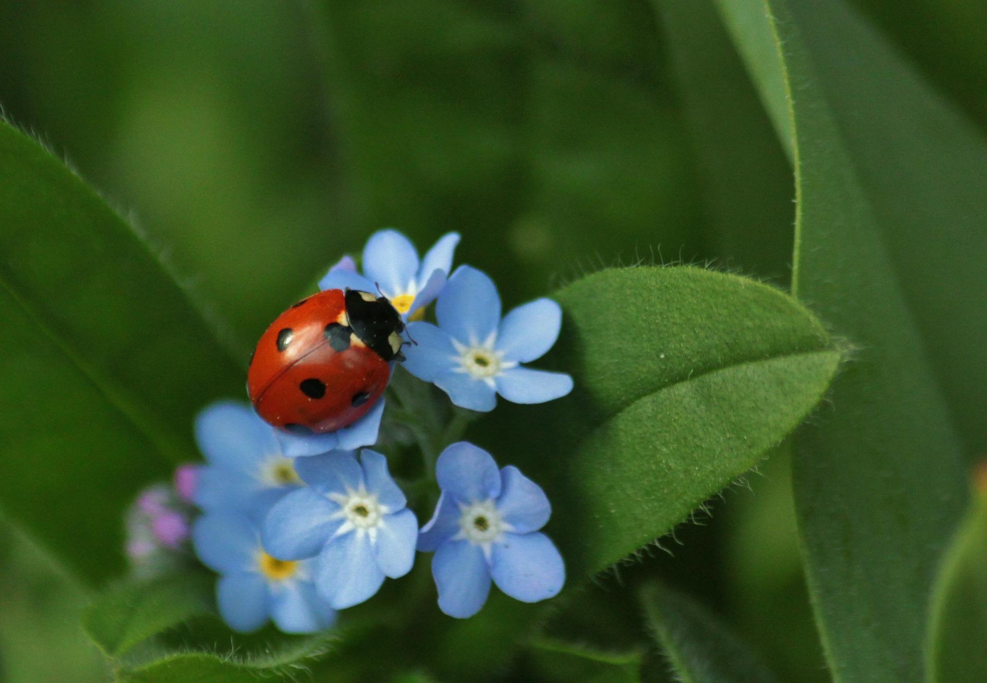 ladybug-308215_1920.jpg