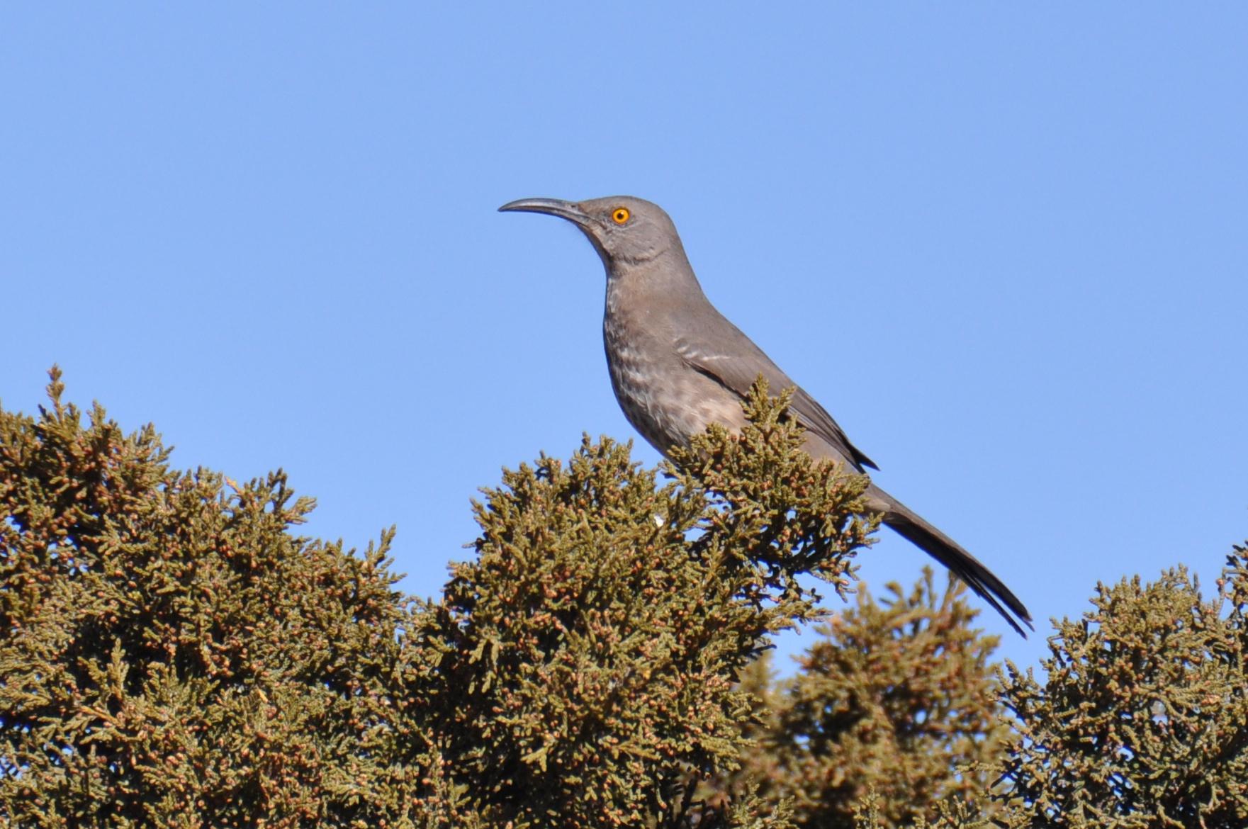 Bird Hub Birding Tour