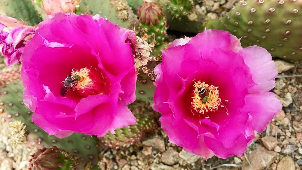 La Tienda Cactus Gardens