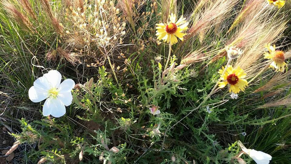 Wildflowers on Morning Walk