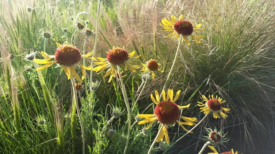 Rains Brought Out the Wildflowers