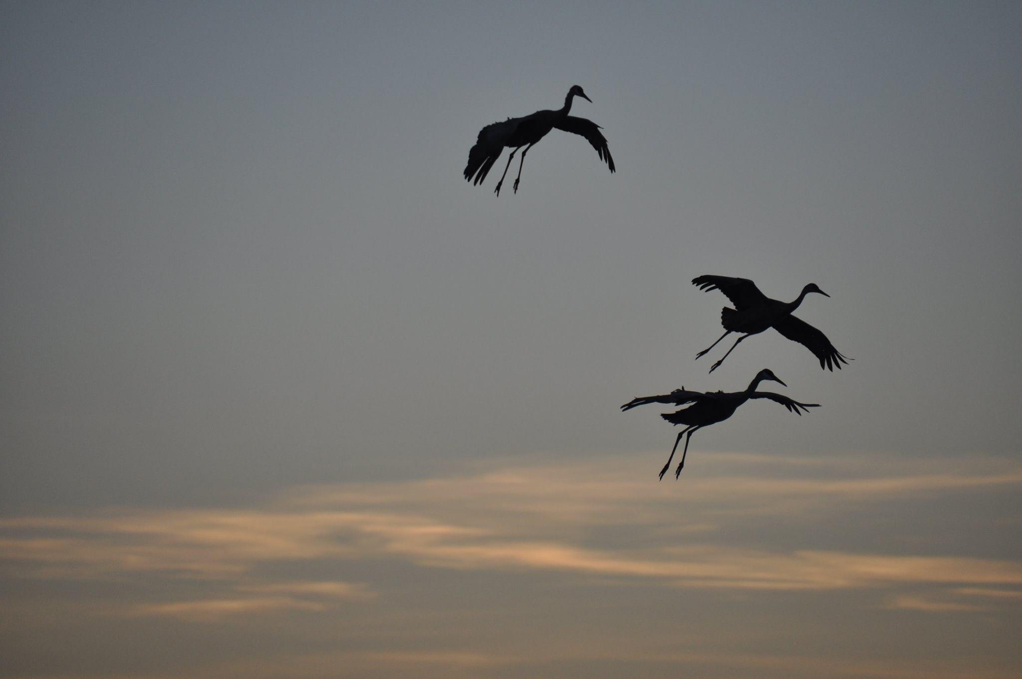 Bosque del Apache Festival of the Crane 2015