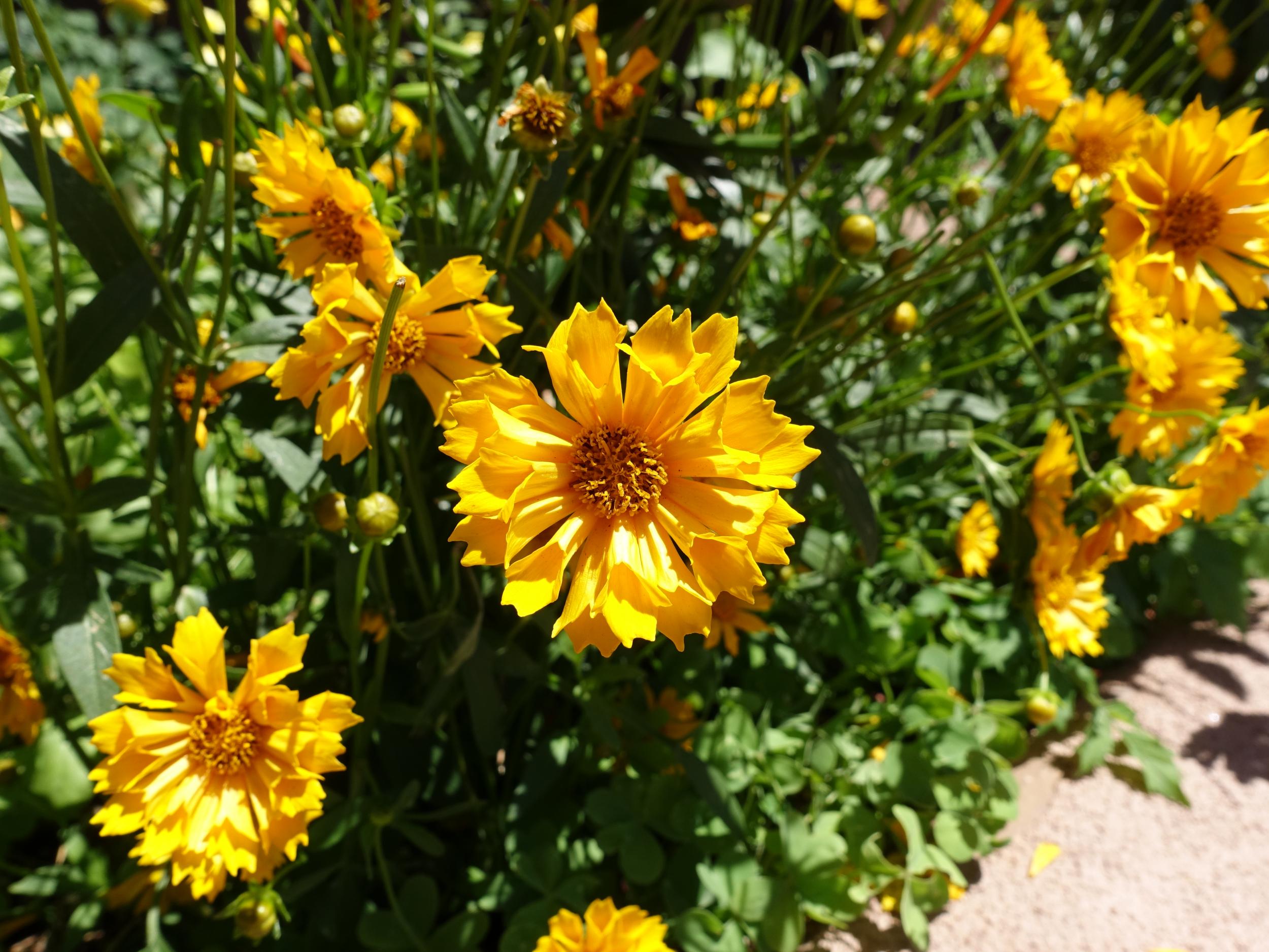 Flowers outside Garrett's Desert Inn