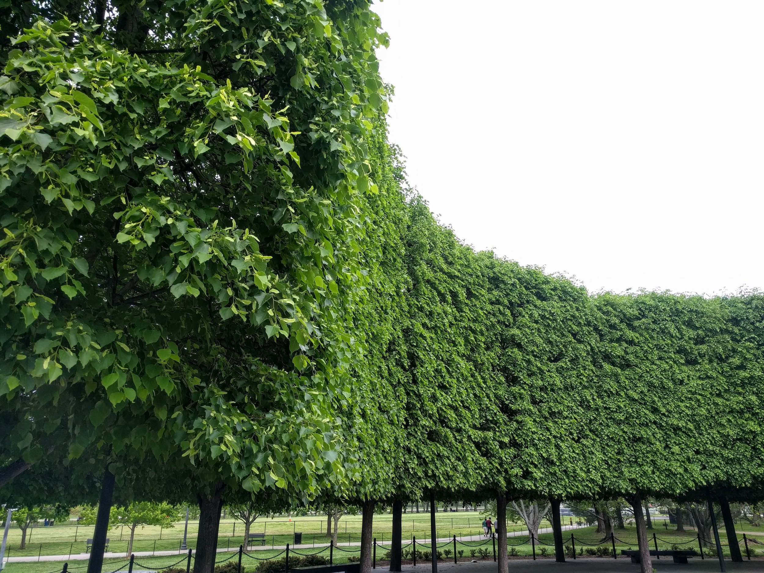 A tree wall