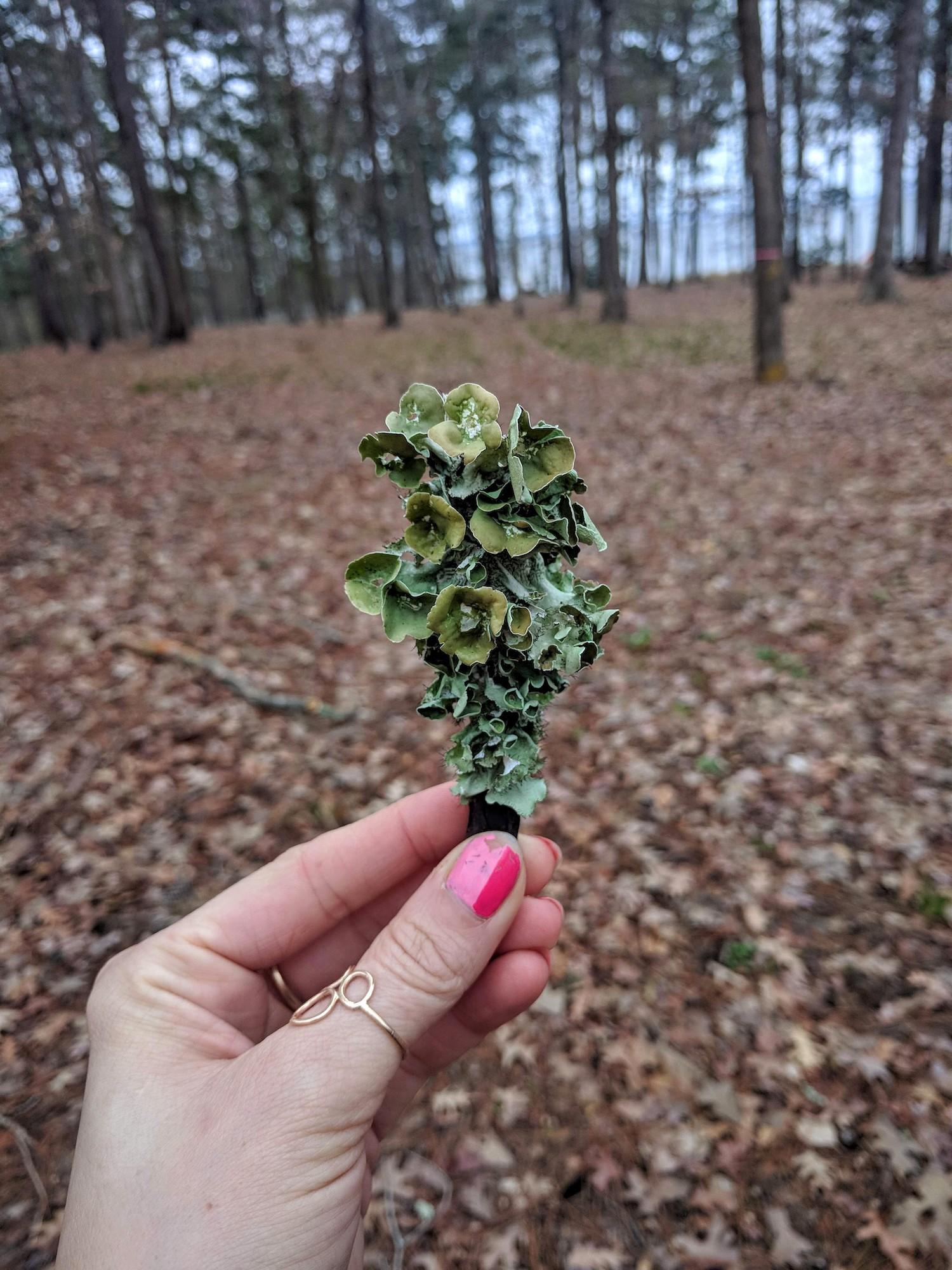 A lichen bouquet
