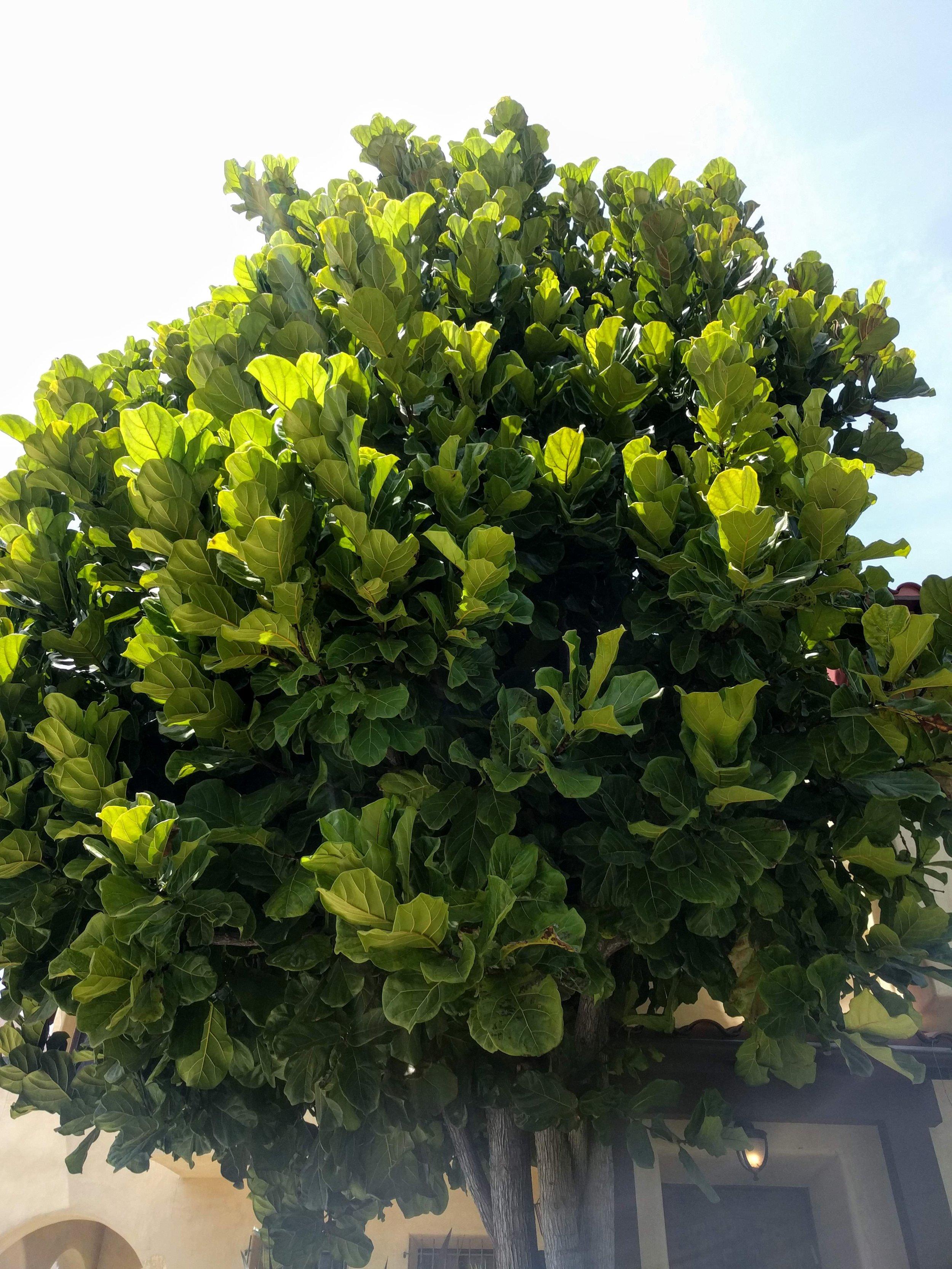 plant03.jpg