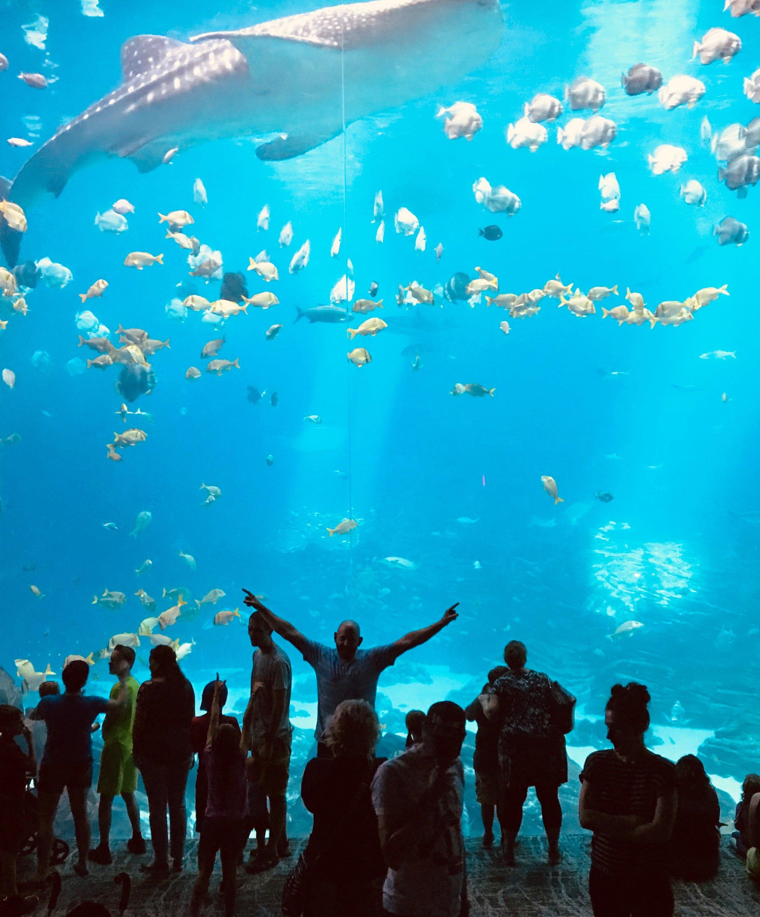 ga aquarium.jpg