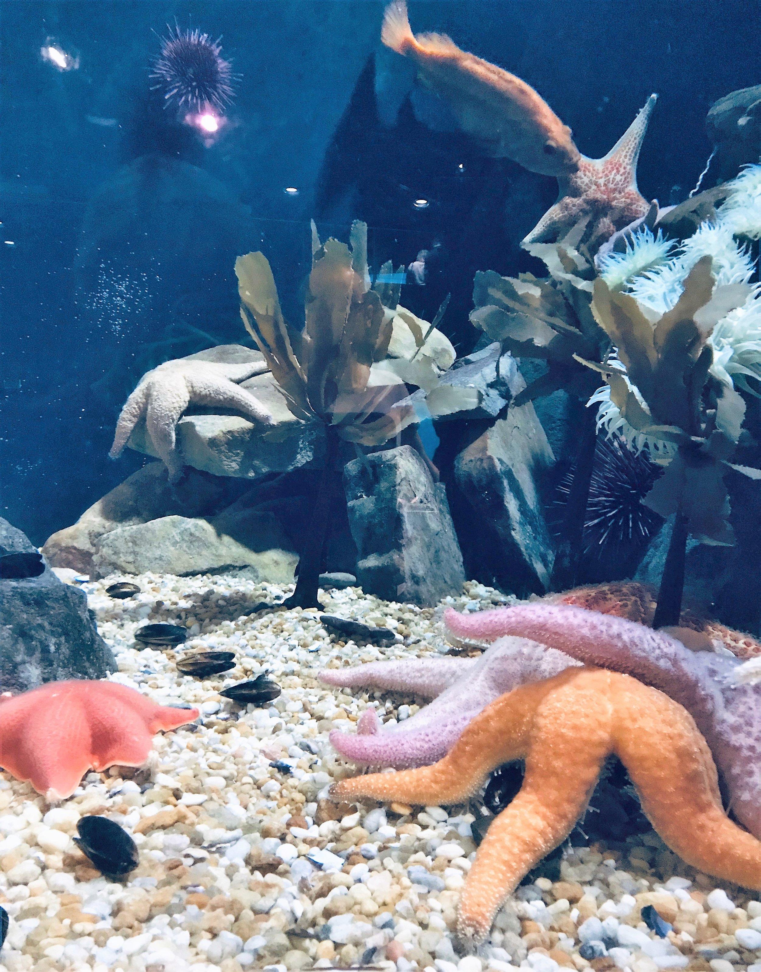 ga aquarium 3.jpg