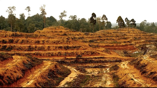 Illegal_Deforestation_Plantation.jpeg