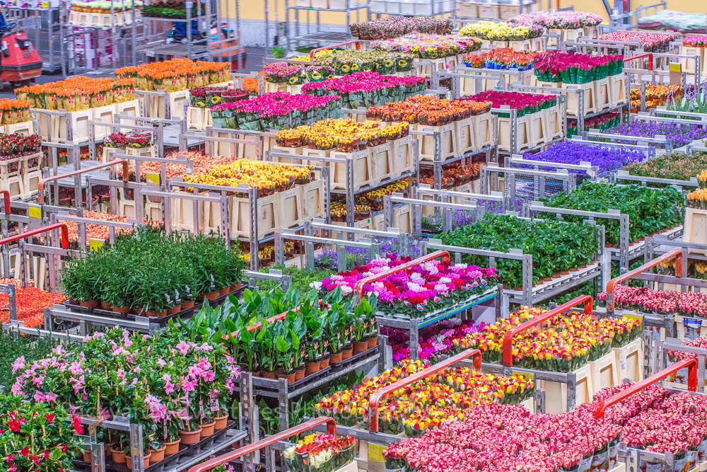 AAlsmer flower marketin Holland, the largest market of the kind in the world