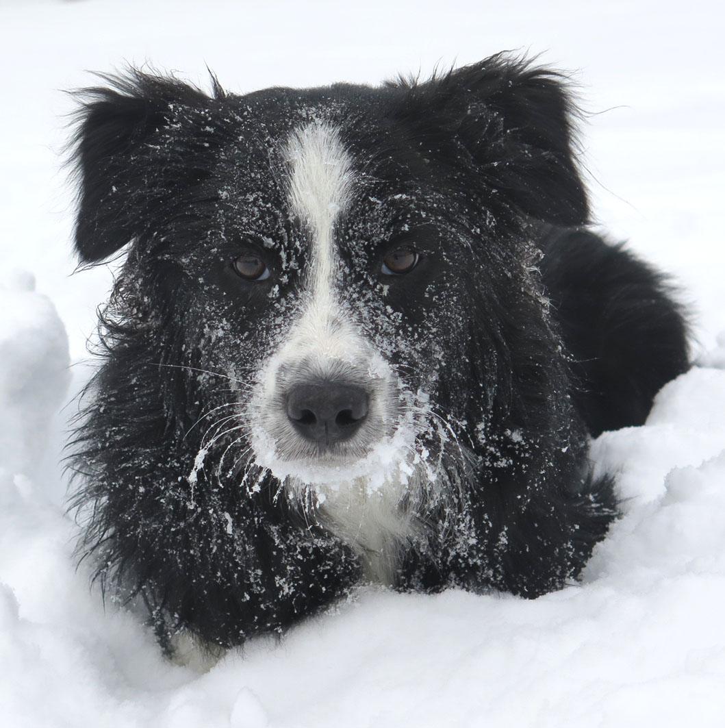 Jordy 7 Monate | Tiroler Winter