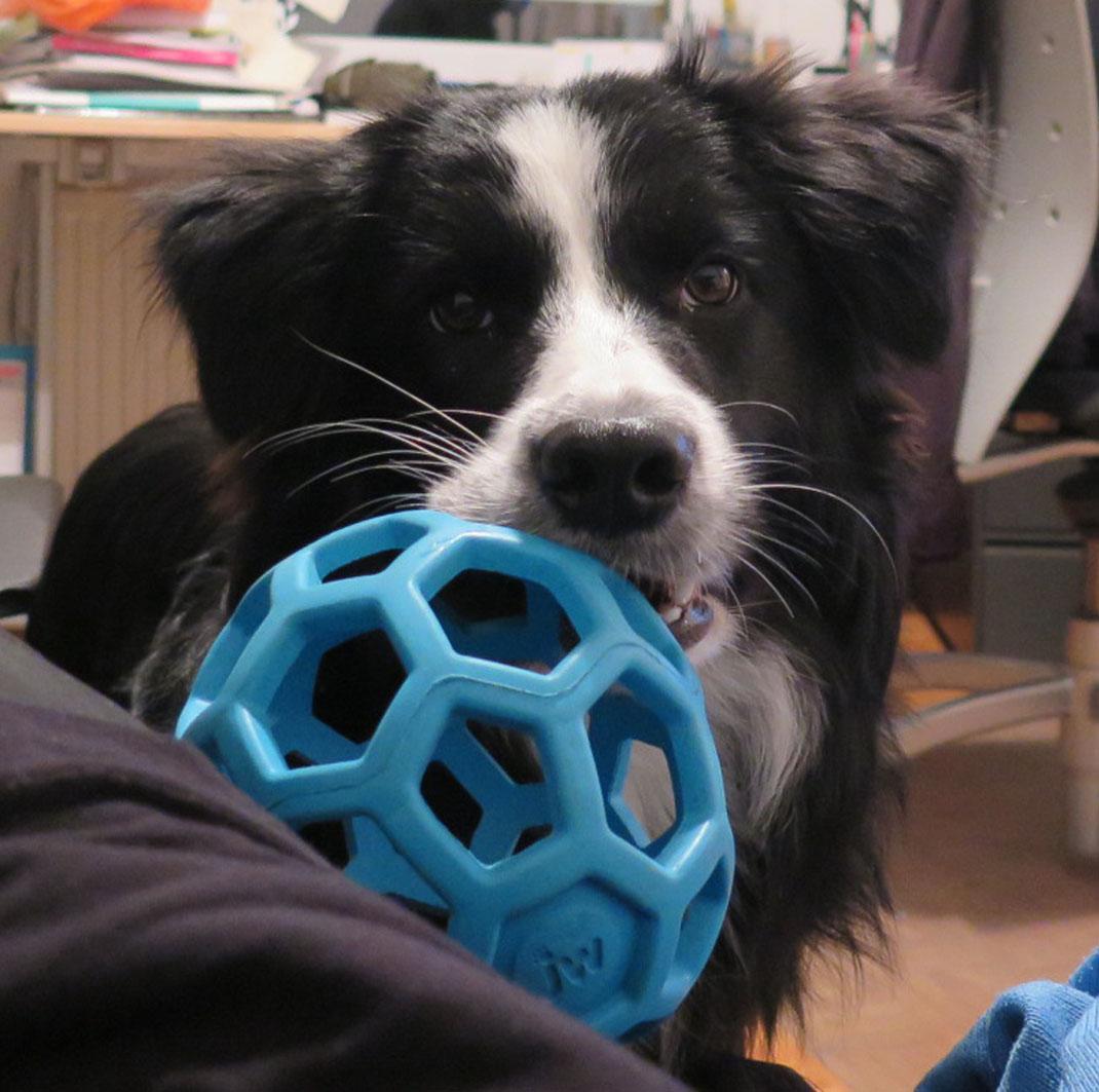 Jordy 8 Monate | Bitte spiel mit mir!