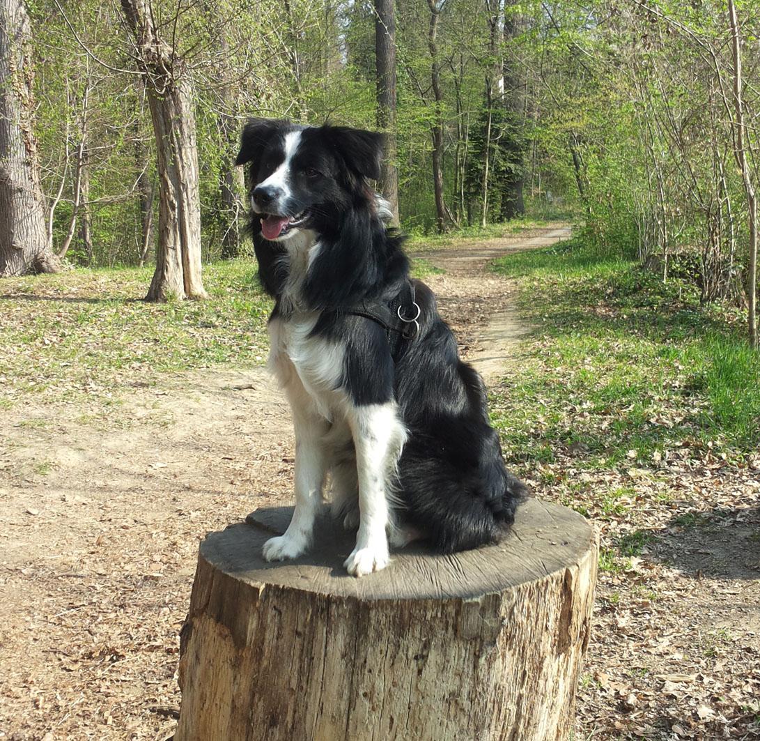 Jordy 10 Monate | Frühlings-Spaziergang