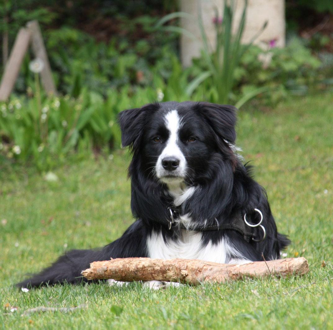 Jordy 11 Monate | bei der Holzarbeit