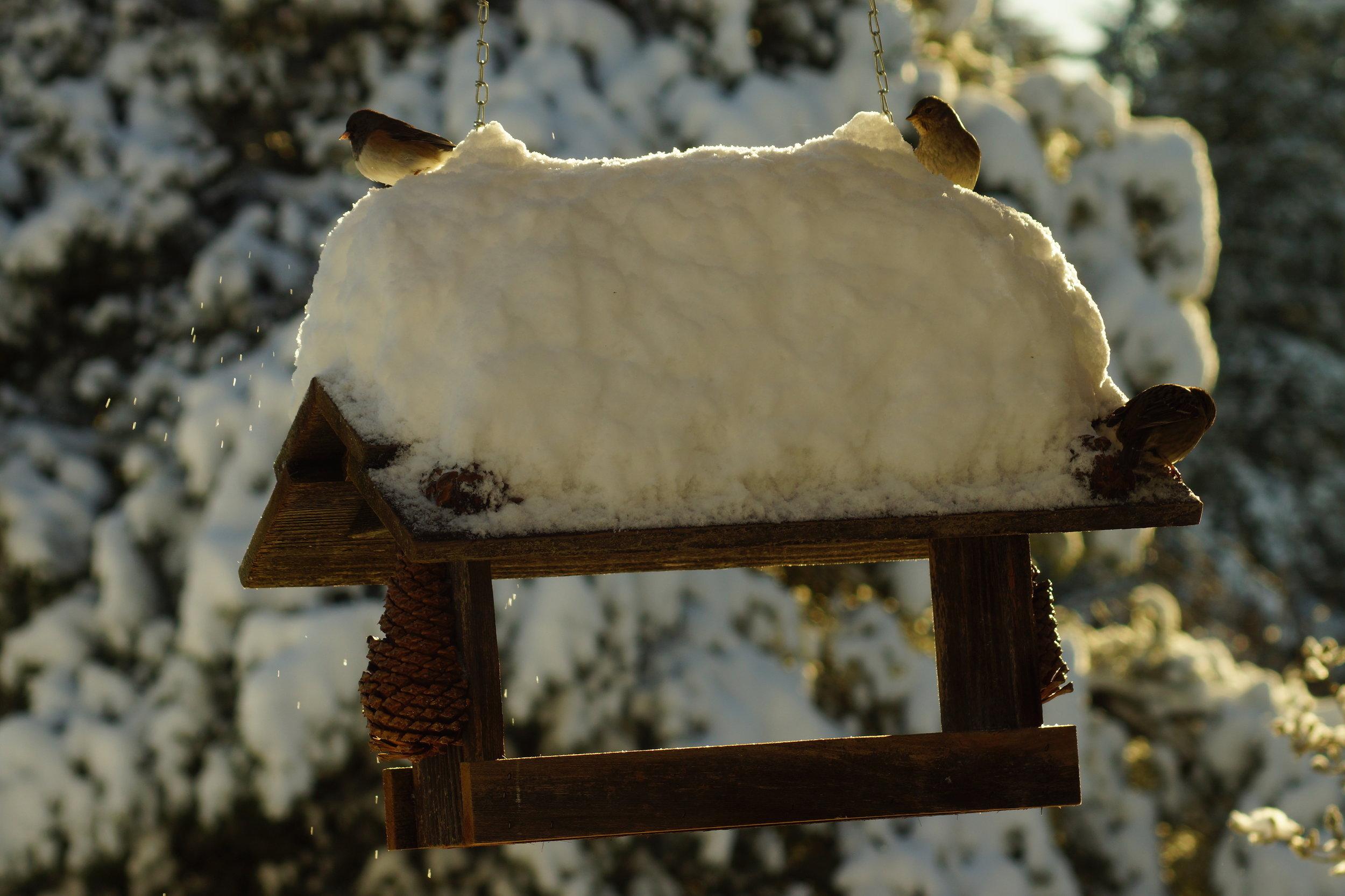 Snowbirds.jpeg