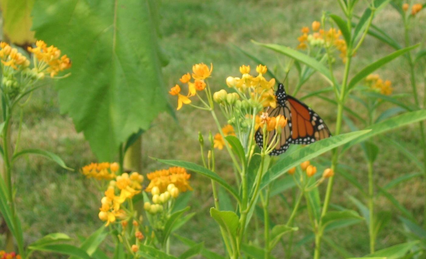 BC_Slideshow_butterfly.jpg