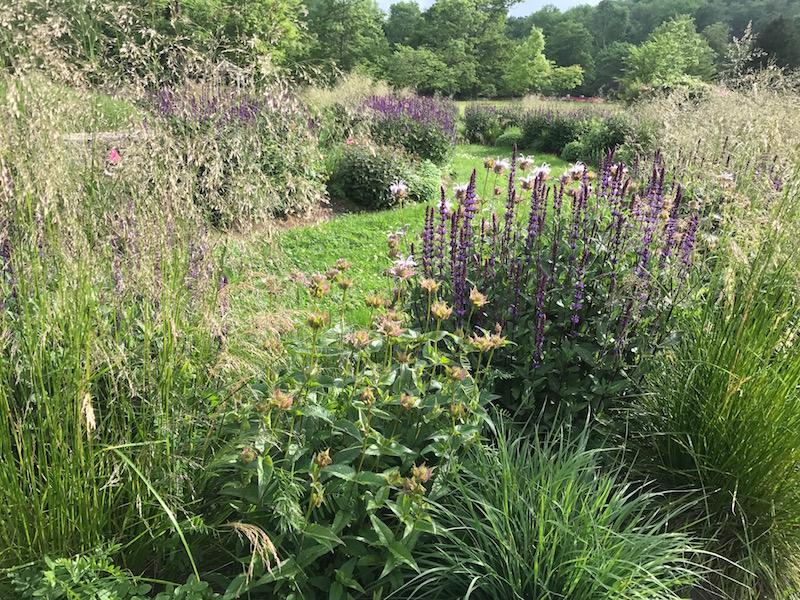 Deschampsia, Monarda and Salvia begin the Spiral's seasonal exuberance.