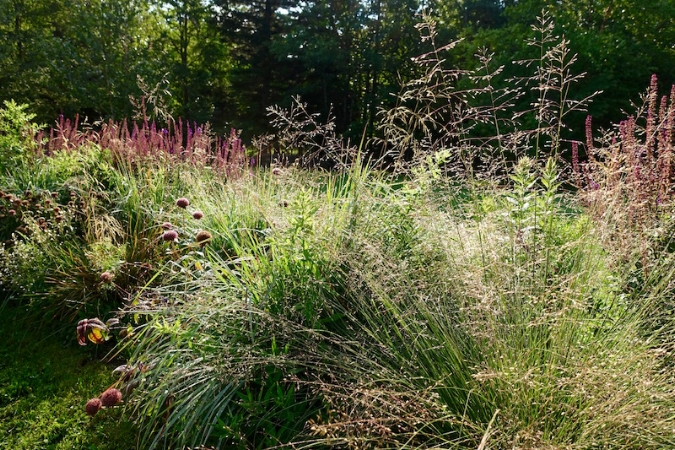 The grass prairie dropseed shimmers in front seedheads of  Monarda bradburiana  and  Salvia nemorosa  in the West Meadow's Spiral.