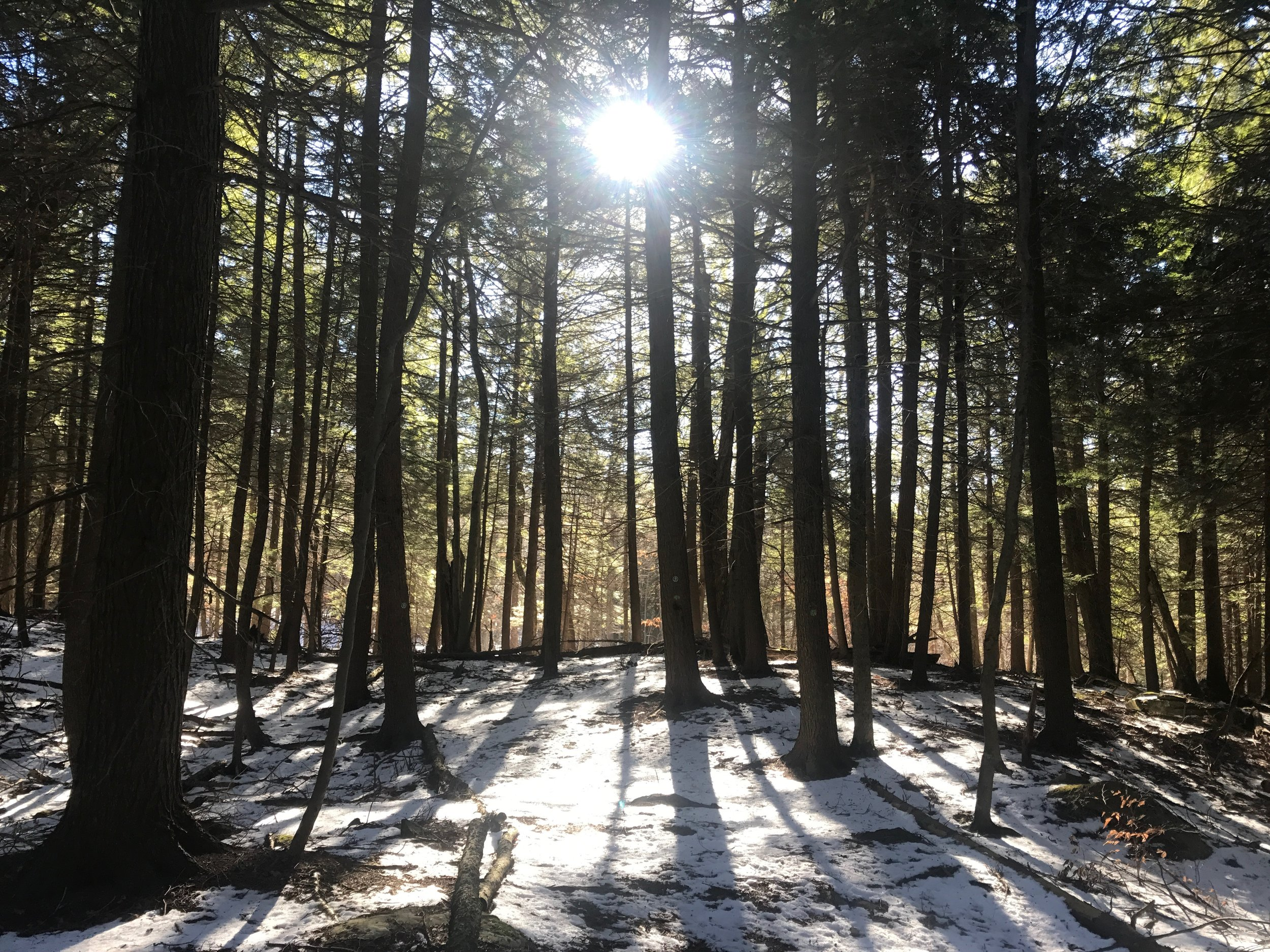 A walk among the red spruce and eastern hemlock in Spruce Glen.