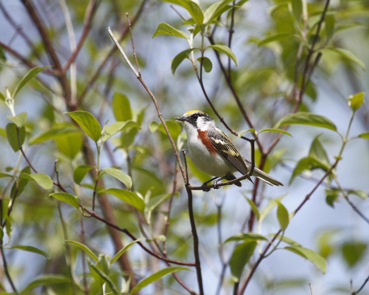 Birding1.JPG